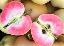 Яблоня Розовый Жемчуг - фото 6390
